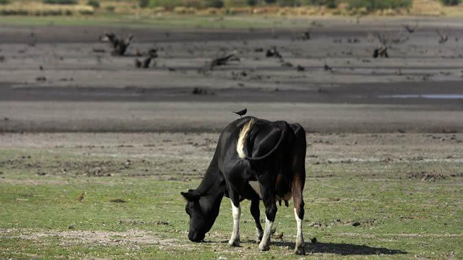Foto de ganado en Uruguay