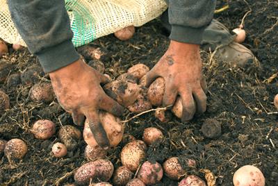 Actualmente la CEPAL y la FAO están desarrollando un estudio sobre la producción científica en materia de agricultura y cambio climático en América Latina.