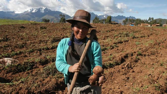 Una campesina sonríe hoy, 26 de marzo de 2008, en la comunidad de Huatata, a 50 kilómetros del Cuzco (Perú). El cambio climático amenaza a la biodiversidad de la papa, el tercer cultivo más consumido por la humanidad, ya que podrían desaparecer muchas de sus más de 5.000 variedades, alertó este miércoles, la comunidad científica en la ciudad peruana de Cuzco, donde se realiza la segunda jornada del foro La Ciencia de la Papa para los Pobres: Desafíos para el Nuevo Milenio