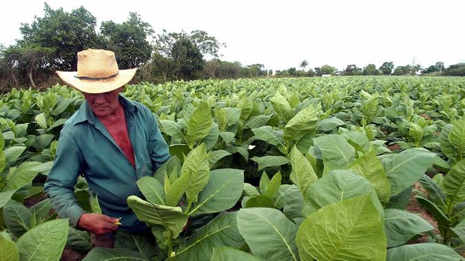photo of a farmer