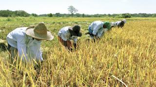 Reunión negociadores agricultura