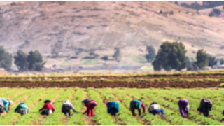 Webinar : Inauguración del curso virtual Bases conceptuales del Acuerdo de París y NDC en el sector agroalimentario