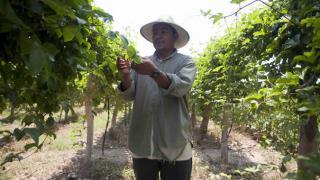 Agricultor en El Salvador