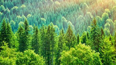 Imagen bosques
