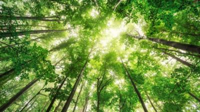 Taller dimensión ambiental de la agenda de desarrollo