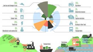 Infographic on carbon footprint and trade