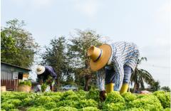 La evolución del empleo agropecuario en América Latina