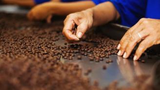 Trabajadores de línea de producción del café